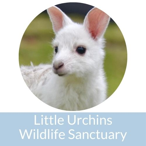 Little Urchins Wildlife Sanctuary