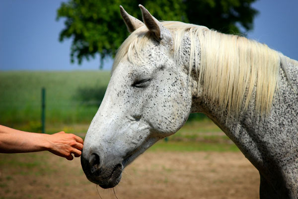 working-with-veterans-equine-therapy-2